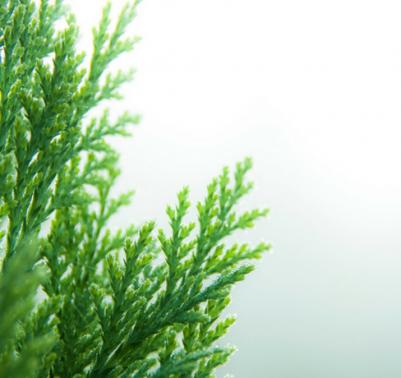 Fito green revolution for Donare un giardiniere