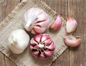 Coltivare spicchio aglio photo