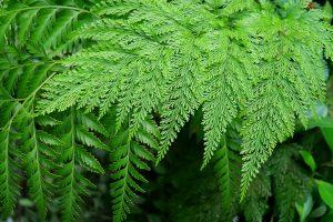 9 piante da ombra per il giardino fito - Piante da giardino ombra ...