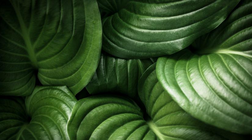 9 piante da ombra per il giardino fito - Arbusti da giardino ...