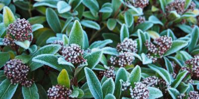 Lavori giardino e orto gennaio