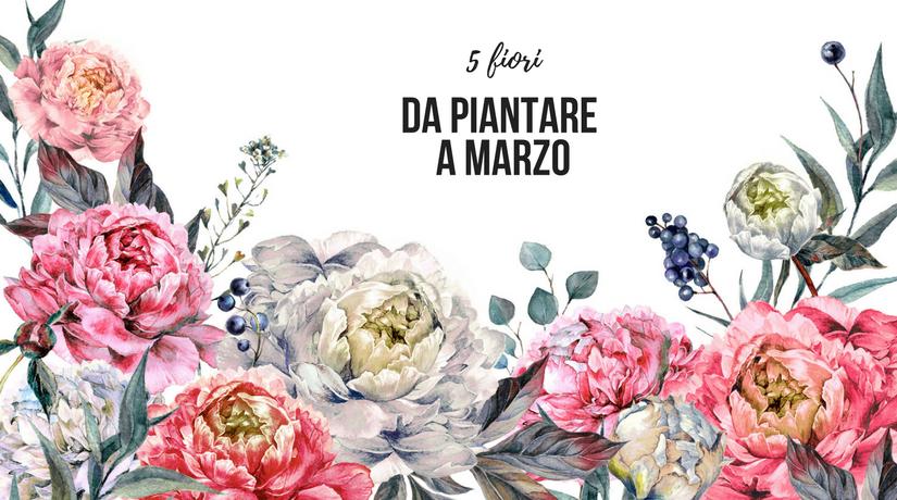 fiori da piantare a marzo