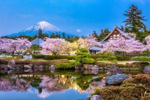 Fioritura ciliegi Giappone 4