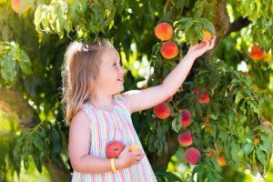 raccolta frutta fase lunare
