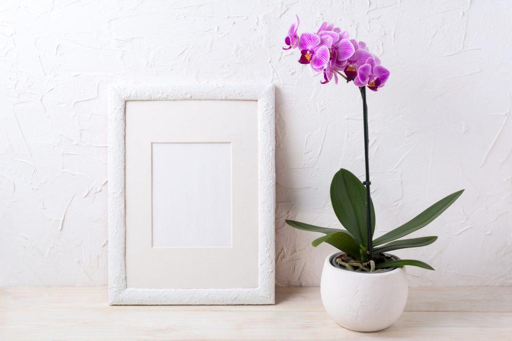 Come Curare Le Orchidee In Casa I Nostri Consigli Per Punti Fito