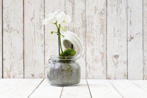 come-curare-le-orchidee-in-casa  (2)