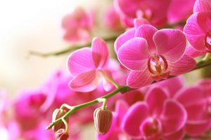 come-curare-le-orchidee-in-casa  (4)