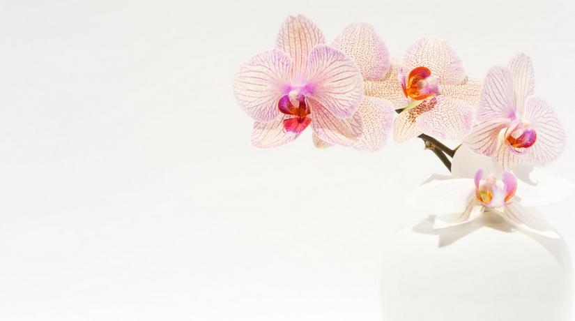 Come curare le orchidee in casa? i nostri consigli per punti! fito