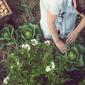 3_MAG_18 Ortaggi da piantare a maggio (1)