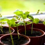 3_MAG_18-Ortaggi-da-piantare-a-maggio-3.jpg