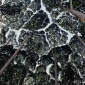 crown-shyness-cover