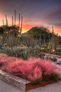 Desert Botanical Garden, Arizona
