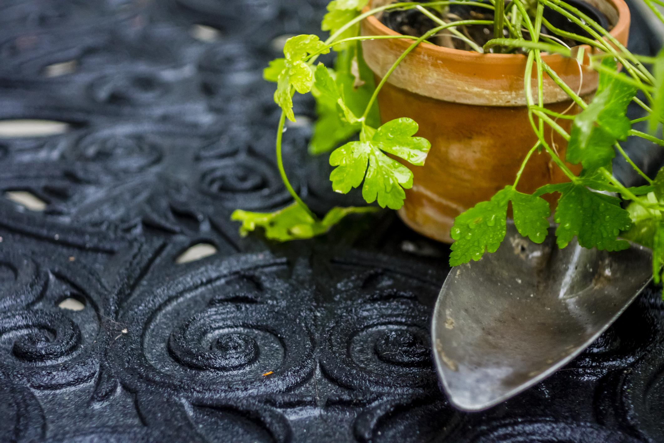 Coltivazione prezzemolo pianta aromatica balcone