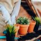 Coltivazione piante aromatiche sul balcone