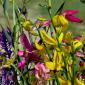 fiori di luglio