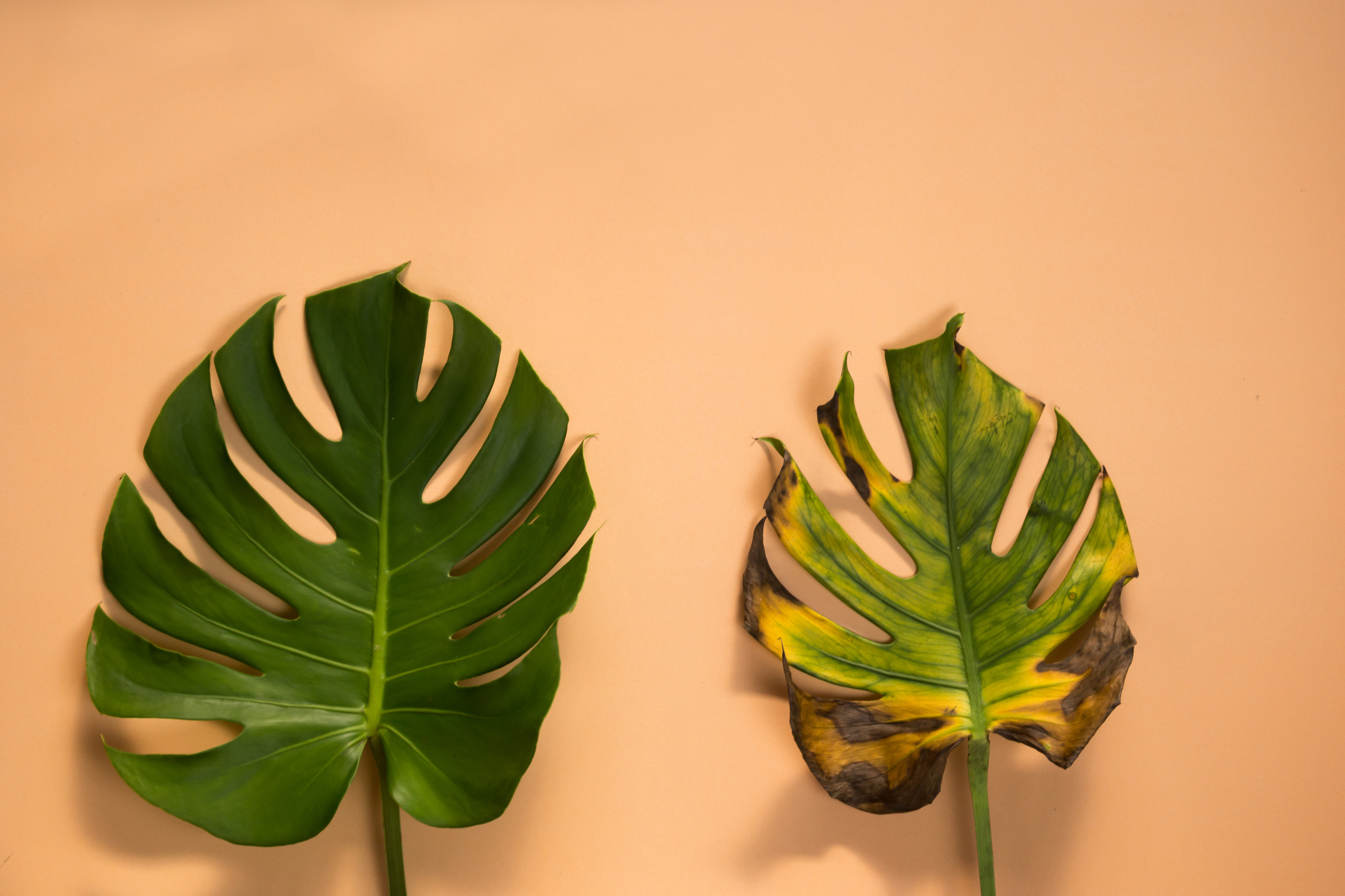 malattie-piante-foglie1