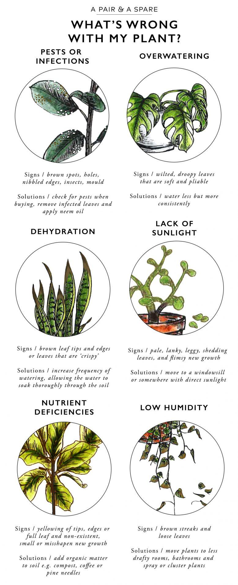 malattie-piante-foglie2