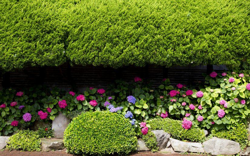Preparare il giardino per primavera (3)