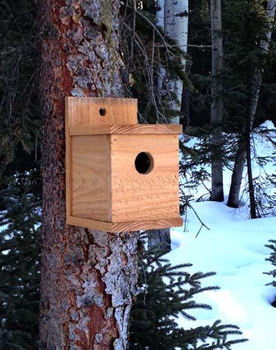 Casette sui rami per uccelli1