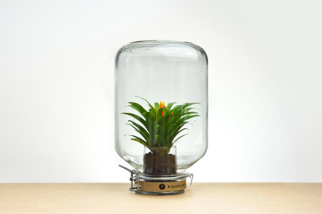 Le piante_autosufficienti (1)