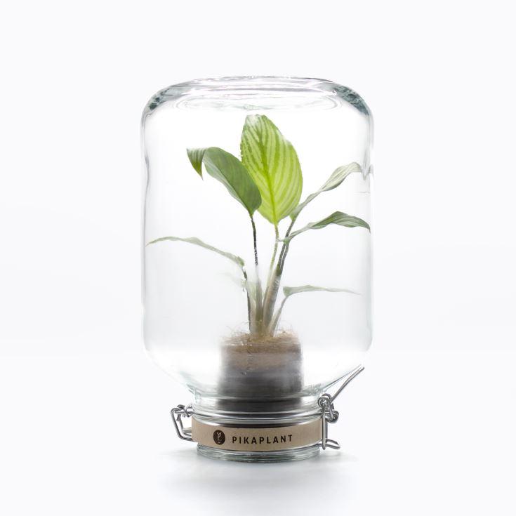 15 MAR 19_Le piante_autosufficienti (5)