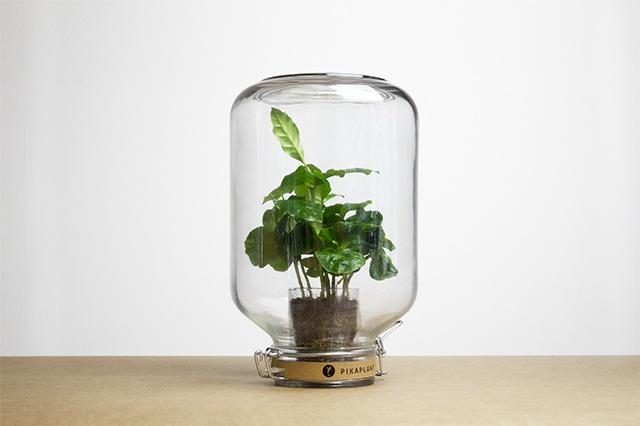 Le piante_autosufficienti (6)