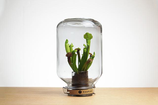Le piante_autosufficienti (7)