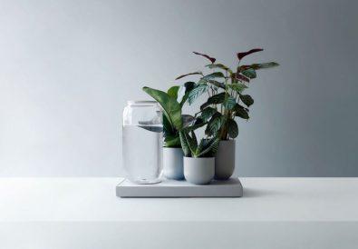 Le piante_autosufficienti COVER