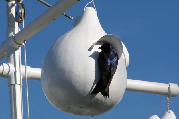 Casette sui rami per uccelli 11