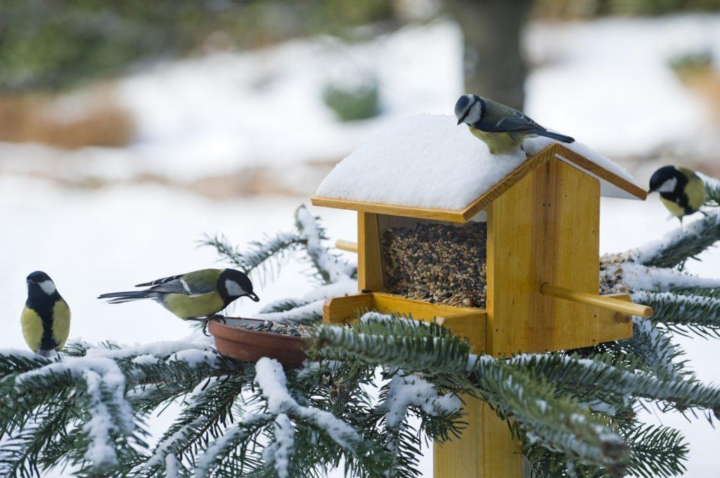 Casette sui rami per uccelli 13