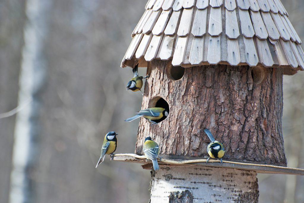Casette sui rami per uccelli 14