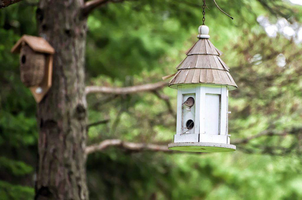 Casette sui rami per uccelli 15