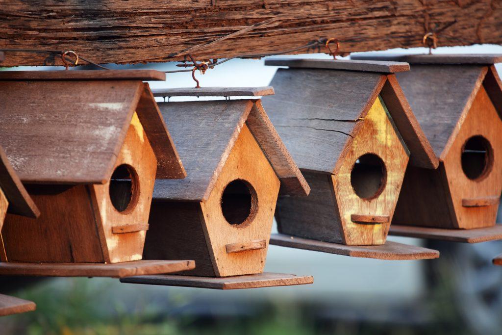Casette sui rami per uccelli 16