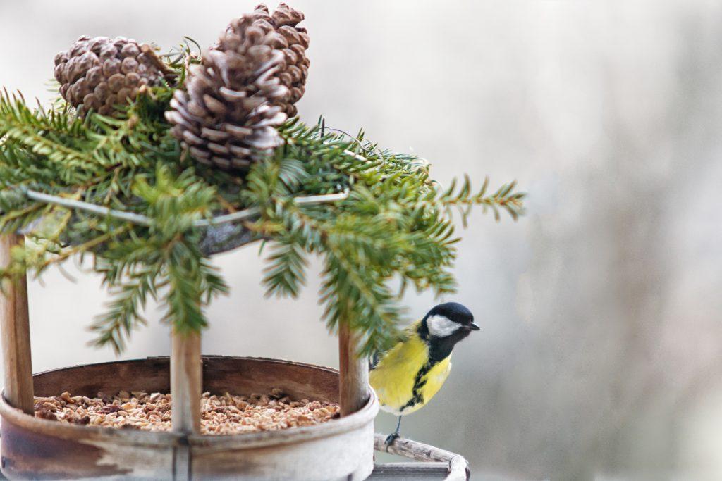 Casette sui rami per uccelli 17
