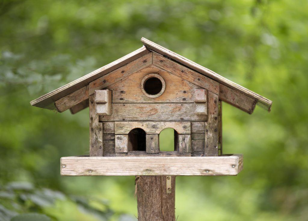 Casette sui rami per uccelli 18