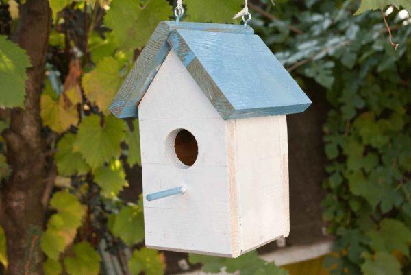 Casette sui rami per uccelli 20