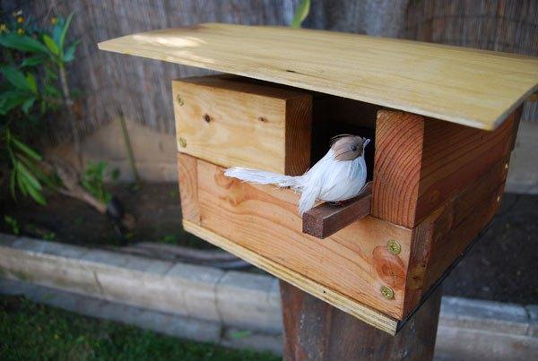 Casette sui rami per uccelli 4