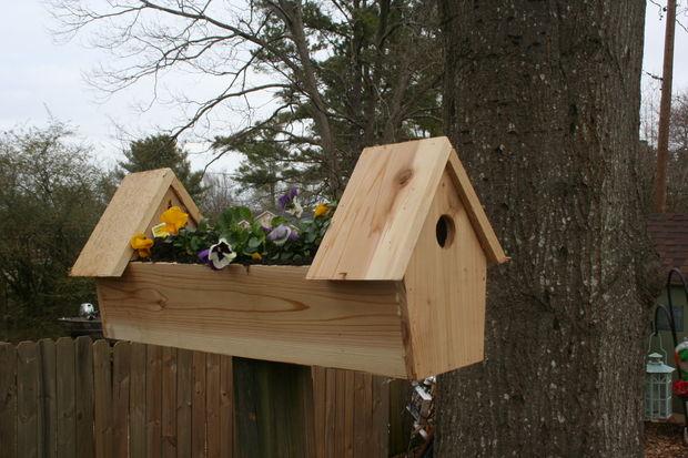 Casette sui rami per uccelli 5