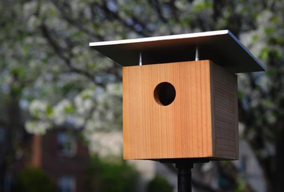 Casette sui rami per uccelli 6