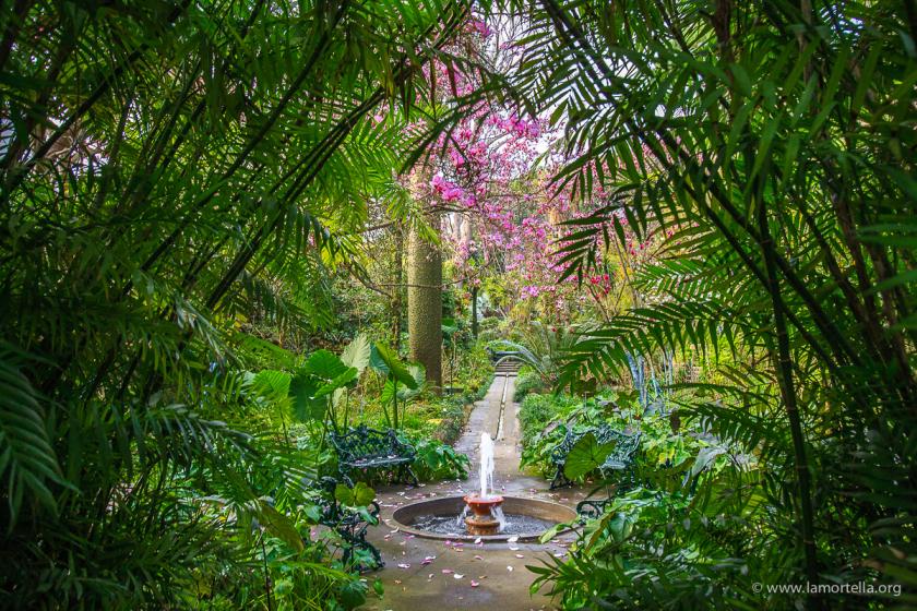 i giardini della Mortella 5