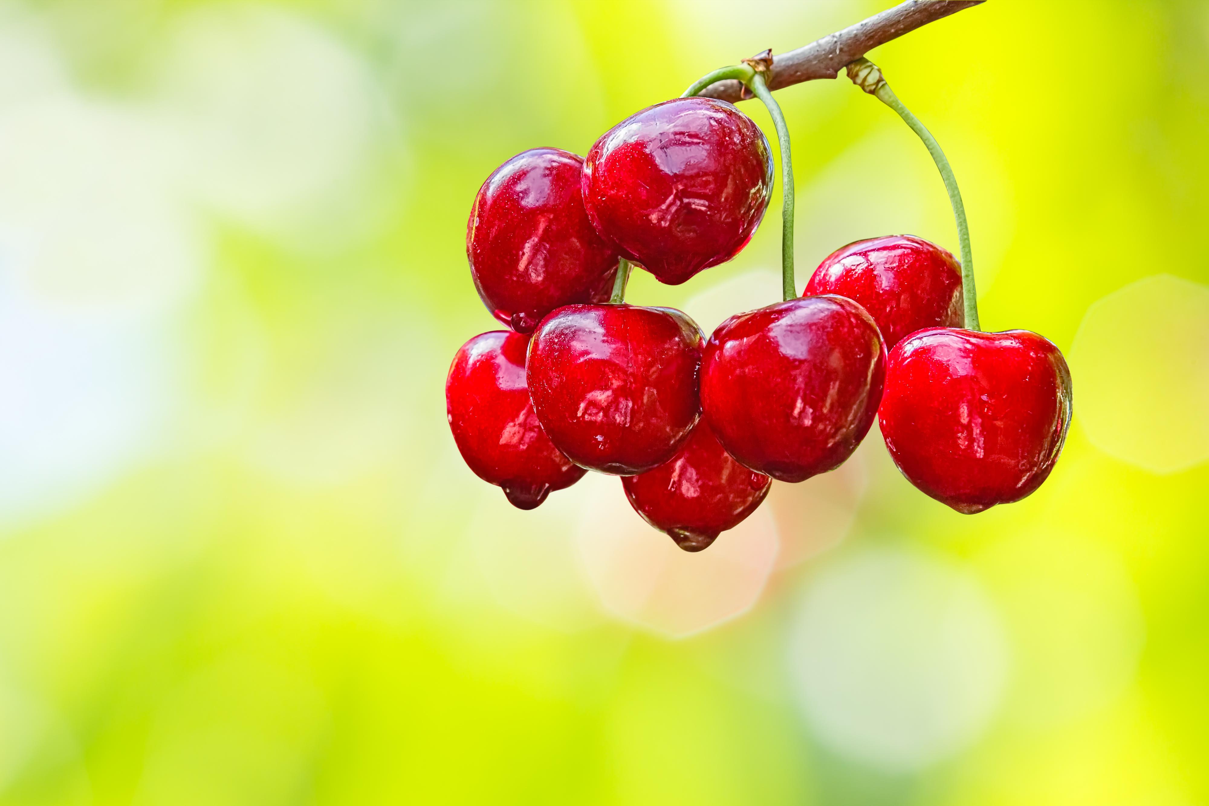 Piante Da Frutto Nane piante da frutto nane. ciliegie – fito