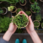 5 errori comuni da fare in giardino e come rimediare