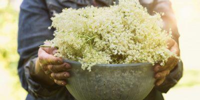 piante officinali maggio
