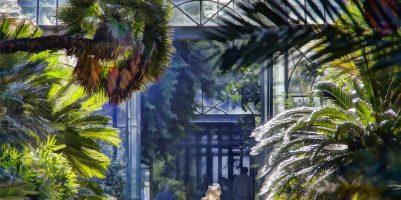 orto botanico palermo 1