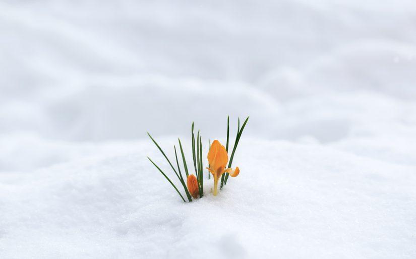 fiore inverno