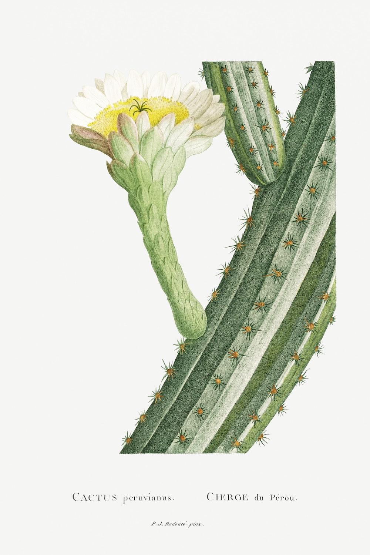 12 FEB 2020_ le illustrazioni botaniche di Redouté (9)