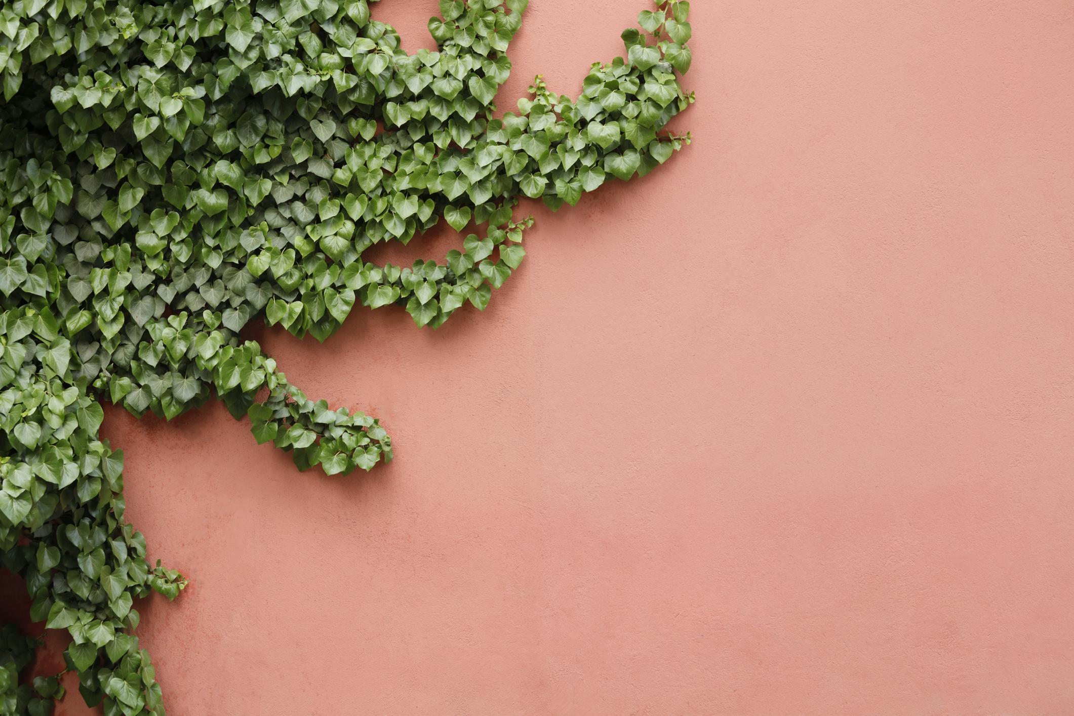 Rampicanti Adatti In Vaso 10 piante rampicanti con fiori | fito