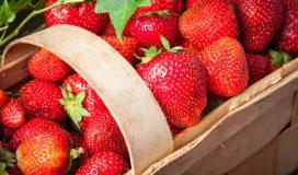 coltivazione fragole rampicanti