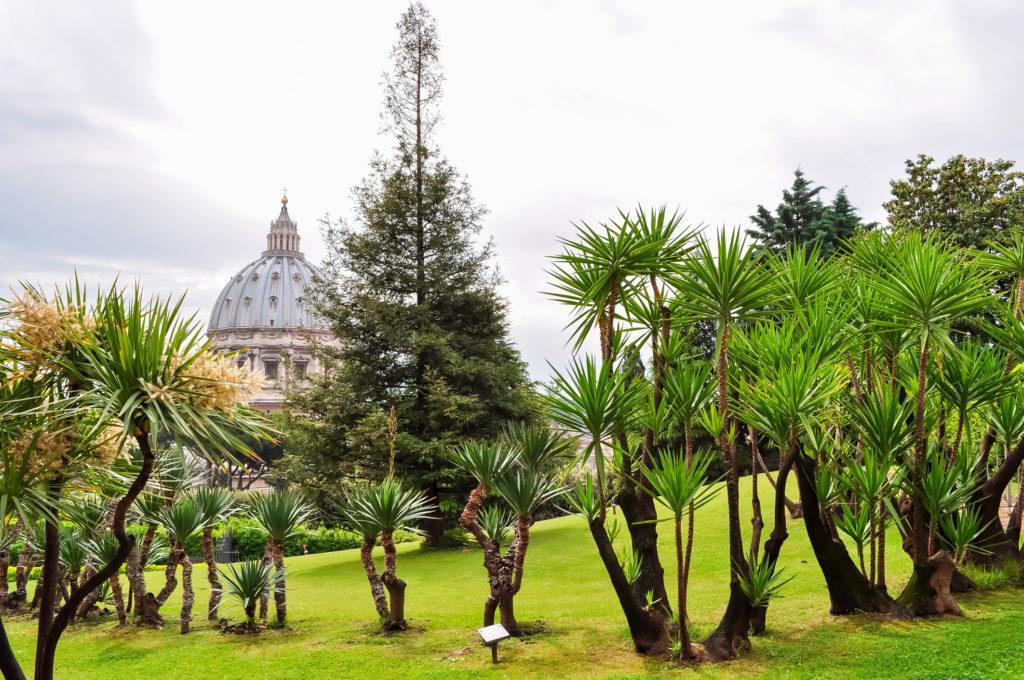 Giardini vaticani 24