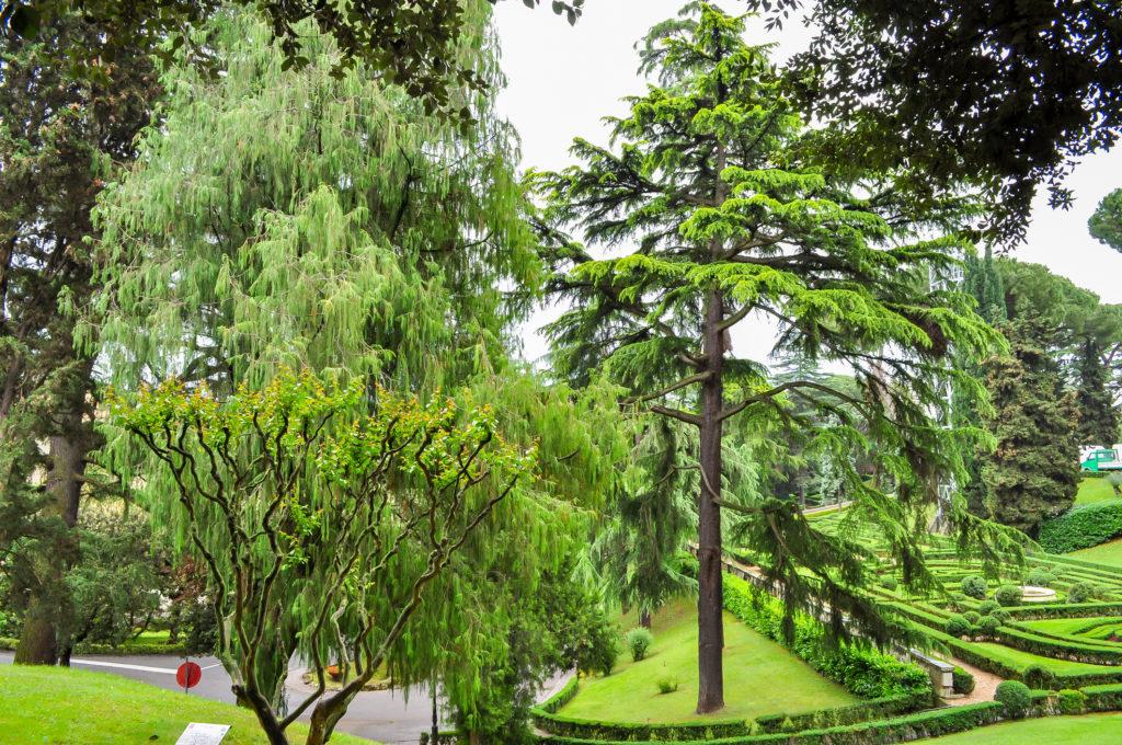 Giardini vaticani 07